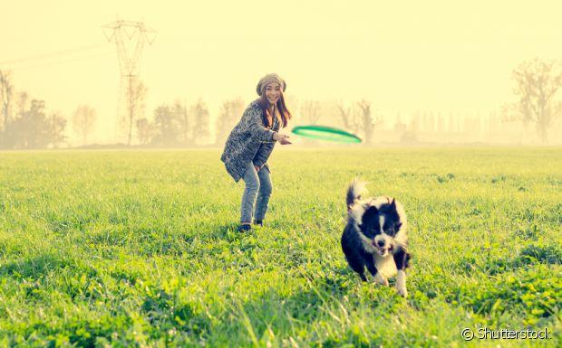 Escolher um cachorro que tenha a mesma disposição que você é muito importante
