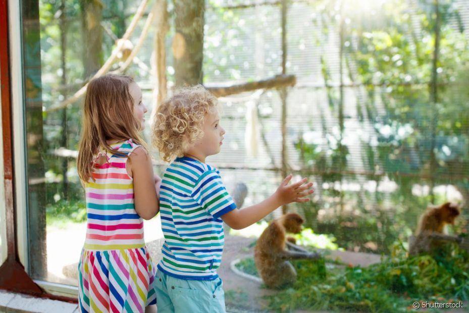 O zoológico é o melhor lugar para os seus filhos conhecerem os animais e a natureza