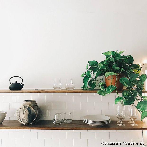 As plantas decoram o ambiente e trazem um pouco da natureza para a sua casa
